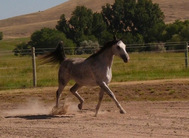 This mare has so much talent.