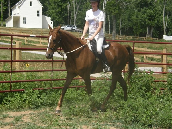 First under saddle trot for Tiki, 2008ish